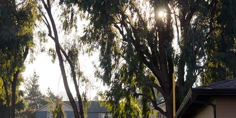 Burton Park Trees